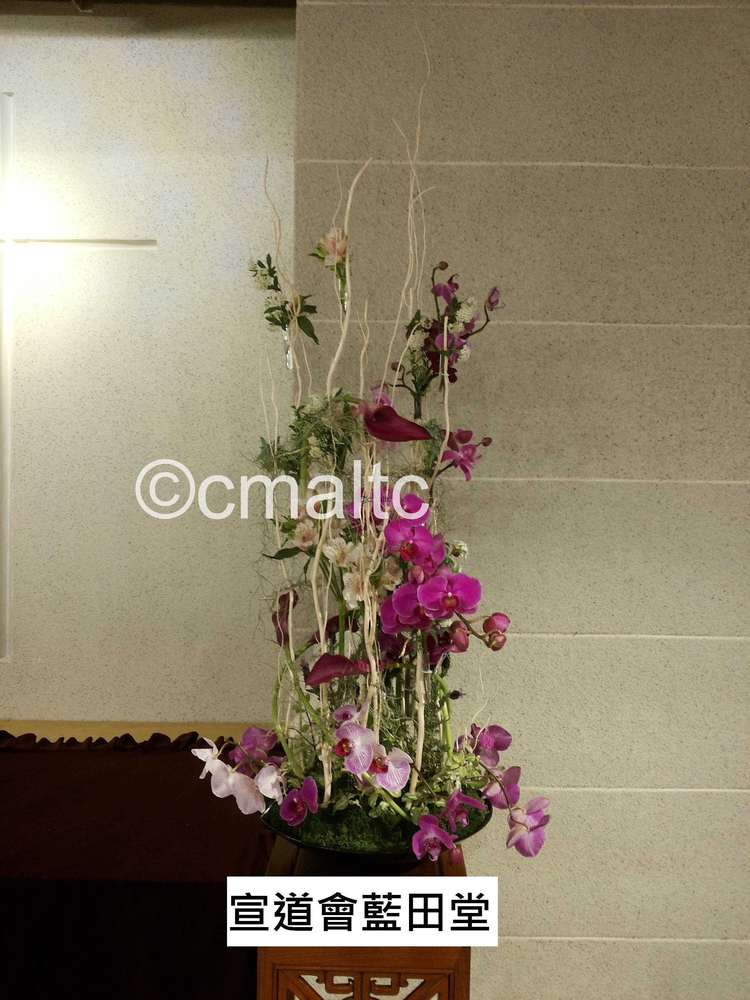 flower20160313