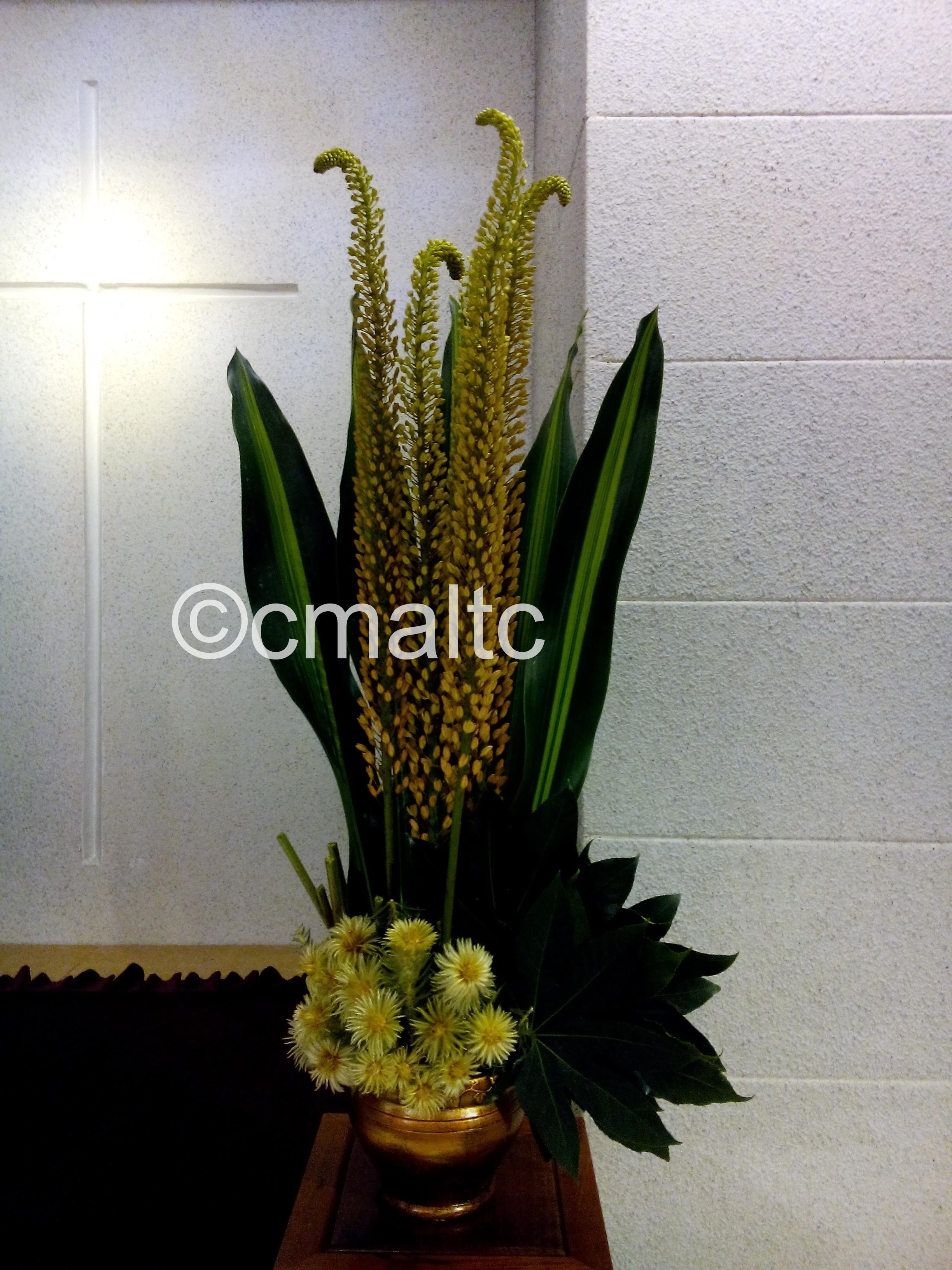 flower20160828