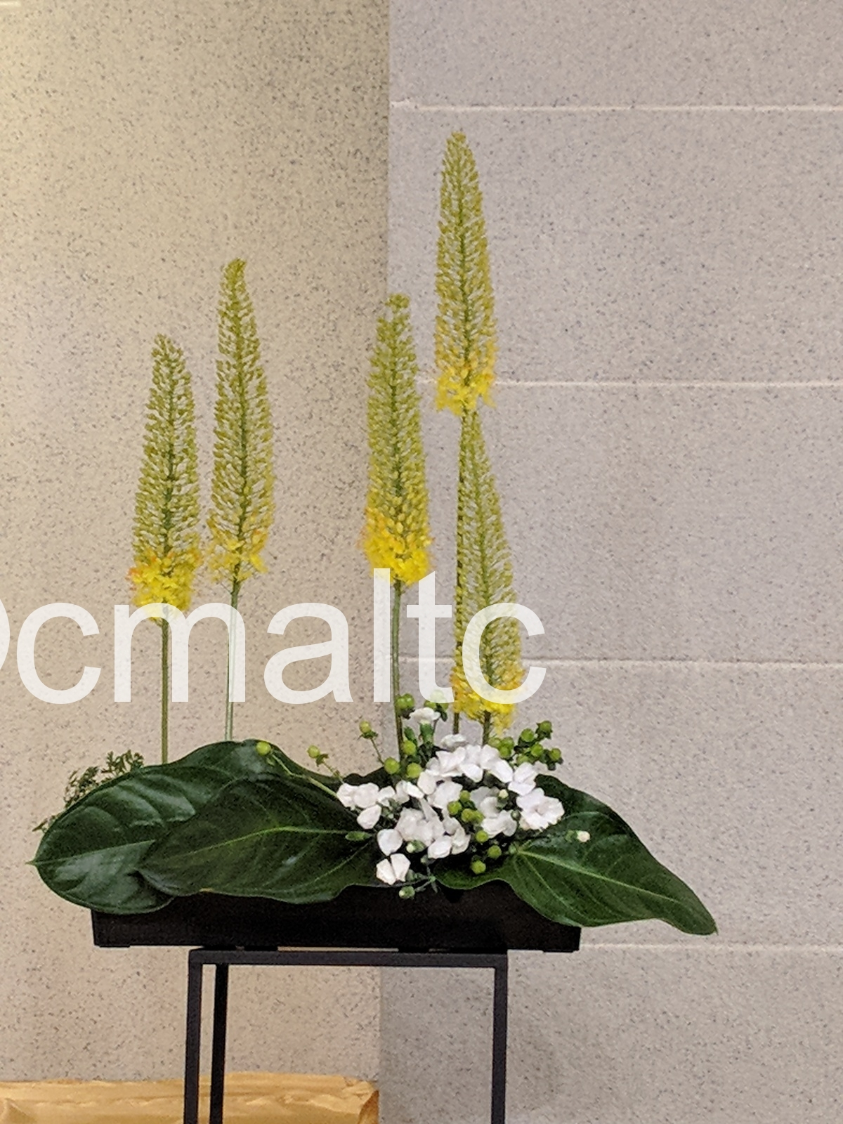 flower20190505