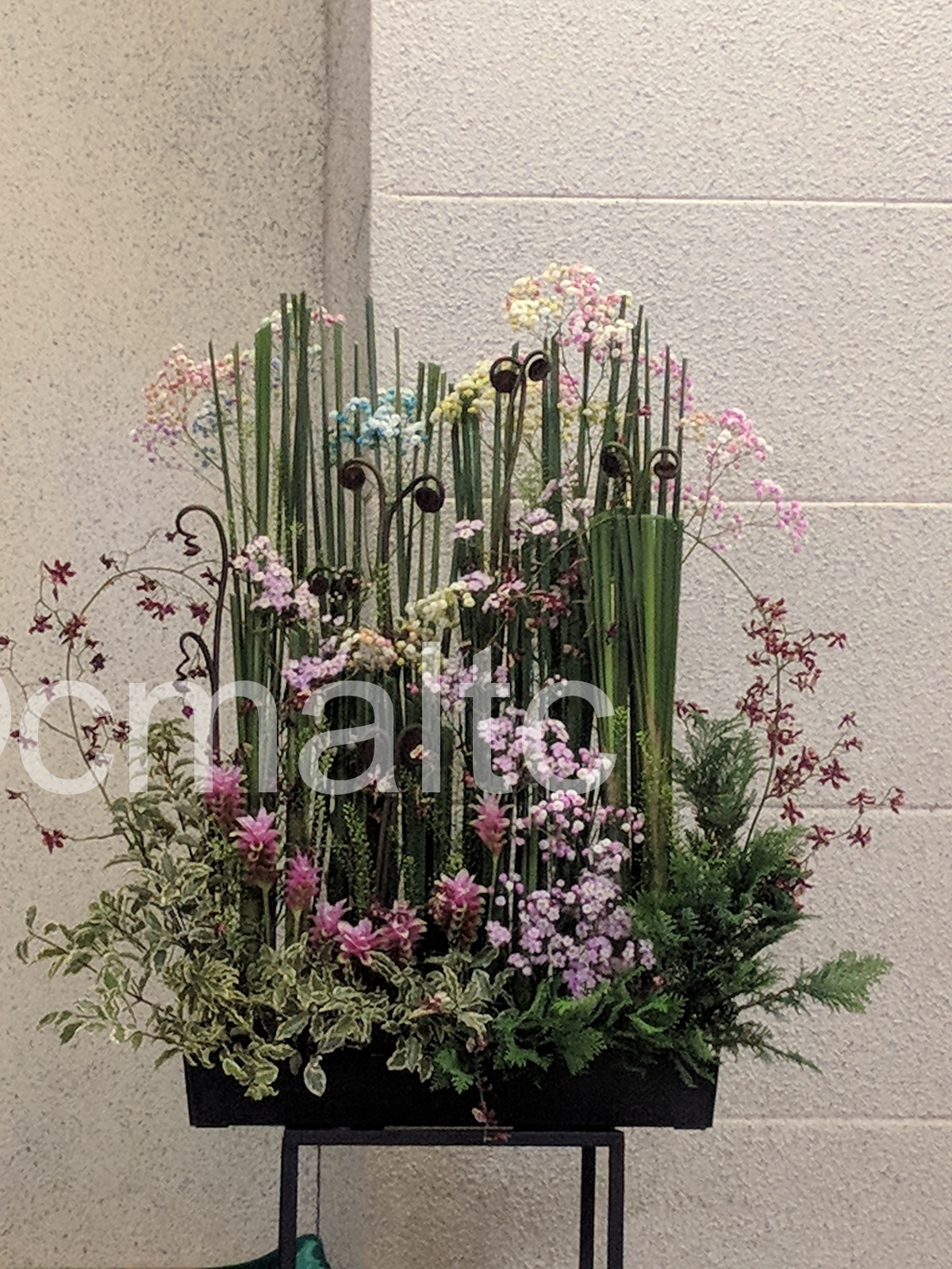 flower20190825
